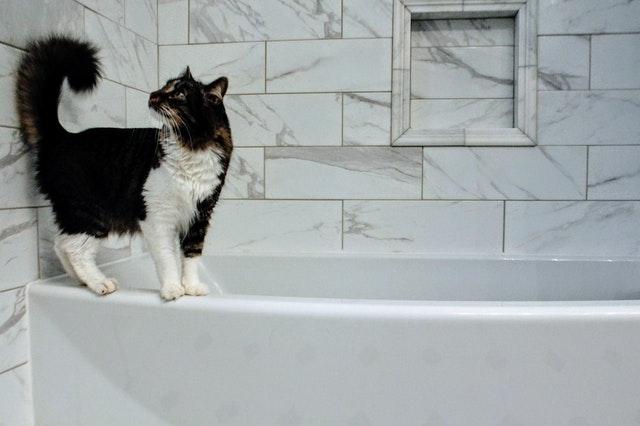 Une salle de bain oui, mais avec une baignoire !