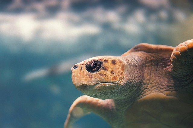 tortue plongee sous marine